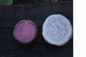picture of taro corms-pii alii and bun long